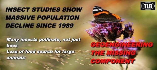 InsectDeclineStudiesfeatured1112